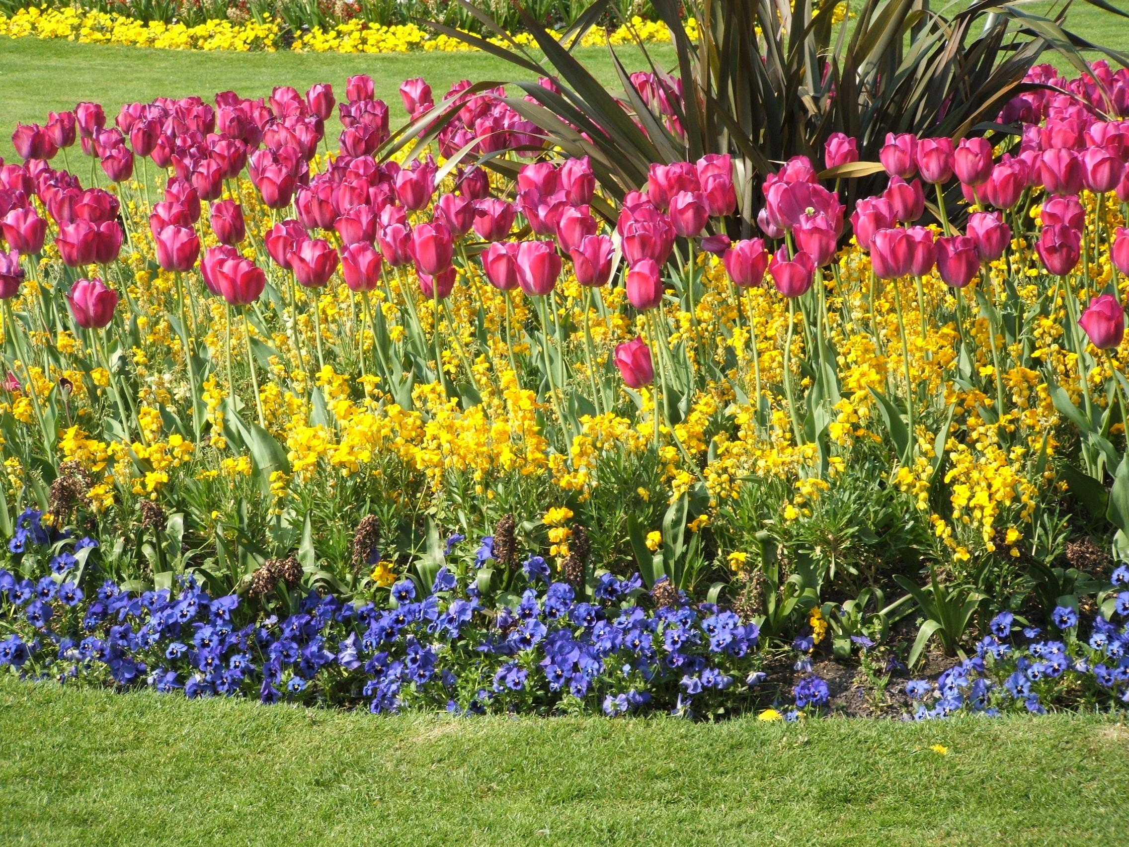 Crea tu jard n hazi jardineria for Crea tu jardin