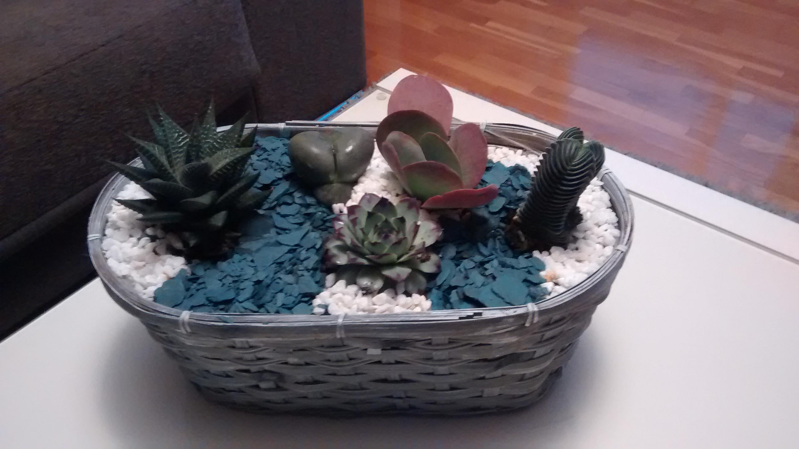 Centros de plantas crasas y cactus hazi jardineria - Composiciones de cactus ...